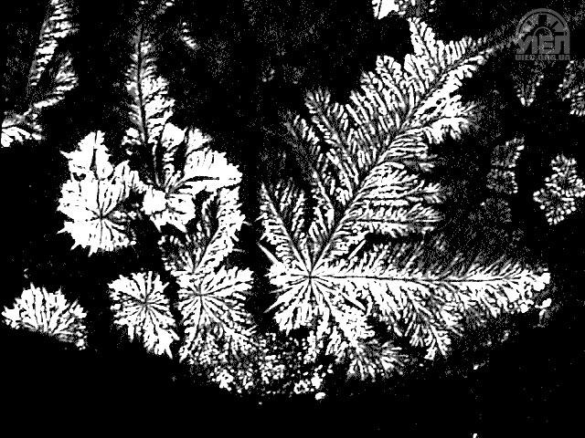 Прозора - Старий Миргород